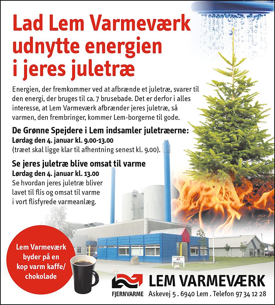 Indsamling af juletræer i Lem By